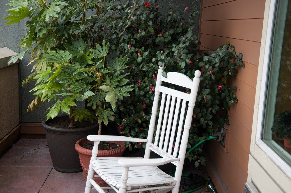 Patio with chair and plant